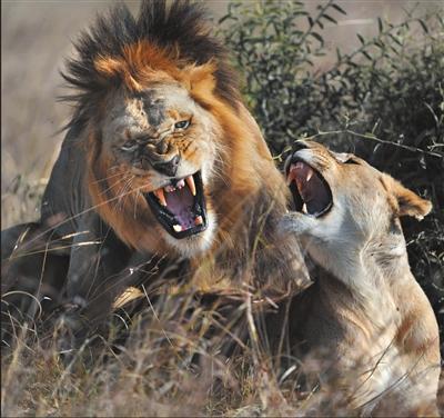 陈俊杰:非洲野生动物摄影展