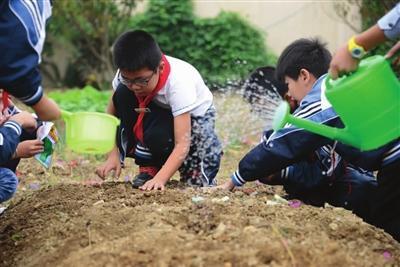 今日龙溪数字平台小学-玉环中心孩子的小学们丽地址报刊英图片